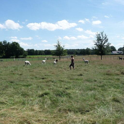 Boerengolf voor groepen vanaf 10 personen