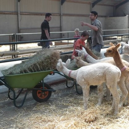 Junior Cursus Alpacaboer