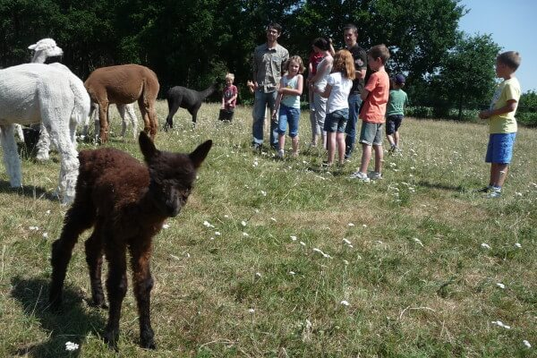 Junior-Cursus-Alpacaboer